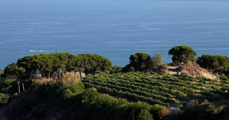 View of vineyard in alella with the sea on the background, during a Barcelona wine tour.