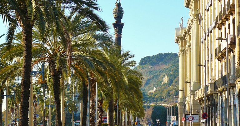 avenue with palm trees in barcelona during a sidecar moto tour