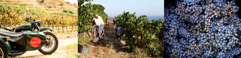 a sidecar on the vineyards, the farmers picking grapes and a basket of grapes