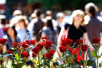 red roses with people in the background